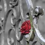 Оградки, заборы, козырьки